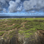 garethwray_our_island_opt