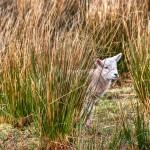 Lost Lamb