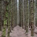 Beltany Woods Ireland