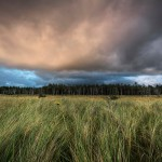 Grasses-Woods-Gathering Storm