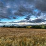 Peaceful Fields