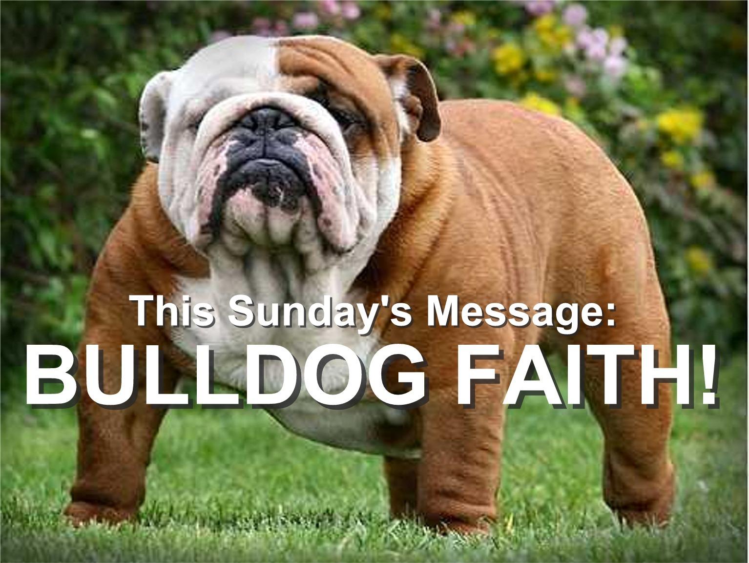 Bulldog Faith3