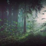 Woods Light